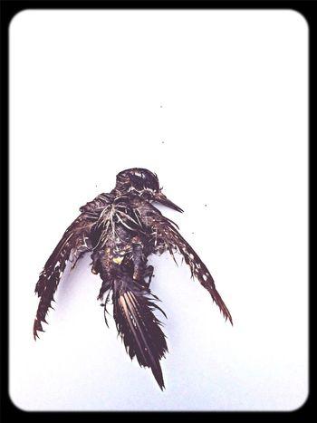 Passeris Bird Morte Fly First Eyeem Photo