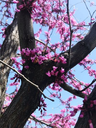 Plant Flower Flowering Plant Growth Beauty In Nature Branch Nature