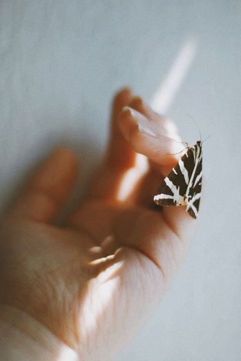 shine Butterfly Hand Human Body Part Shine Shadow Simple Awsome VSCO Skin Tumblr Vintage Beauty Women Photography Photographer Like4like Likeforlike Eye4photography  EyeEm Gallery EyeEm Best Shots Eyeem Market EyeEm Woman WeekOnEyeEm Touch Relationship Human Hand Close-up