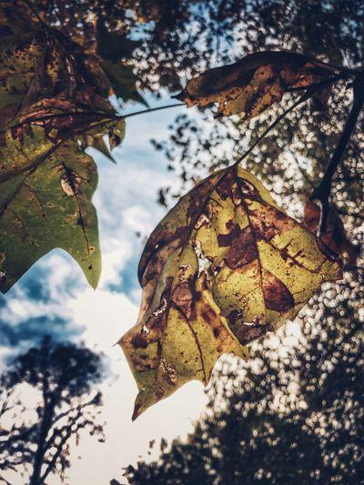 Autumn leaf in