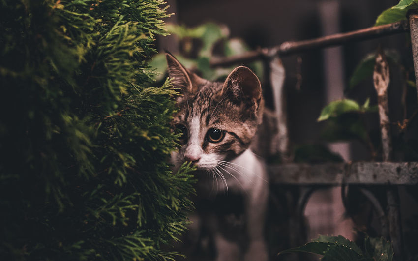 Close-Up Of Kitten Standing By Plants