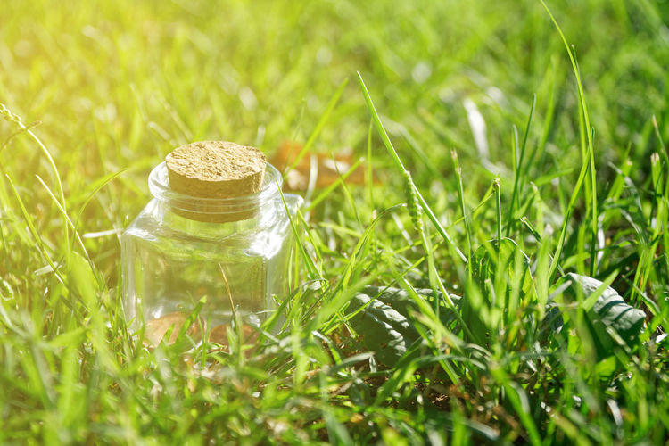 Little decorative bottle Bottle Jar Decorative Postcard Defocused Defocused Background Plant Green Color Grass Food Selective Focus Container No People Freshness Nature Field Wellbeing Close-up Food And Drink Land Beauty In Nature Outdoors Growth Glass - Material Day Airtight