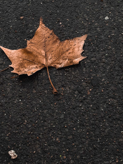 The Fall Golden Shimmering Wilted Left Leftbehind Left Behind Close Up In Front Copy Space Background Marketing autumn mood Autumn Loneliness Maple Leaf Autumn Maple Leaf Change Textured  Dry Close-up Fallen Fallen Leaf Fall Dead Plant Autumn Collection Falling Wilted Plant Dried Plant