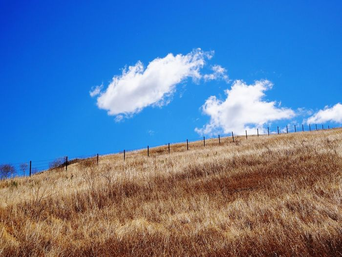 Geld Field Blue Sky Nature Tranquil Scene Day Grass Cloud - Sky No People Beauty In Nature Landscape