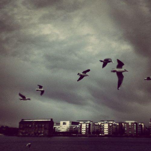 Winter day in Berlin Rummelsburg Winter Cloudy Birds Spree Europe Germany Deutschland Igs_world Igs_germany Igs_deutschland Igs_europe Ig_europe Ig_deutschland GreyDay
