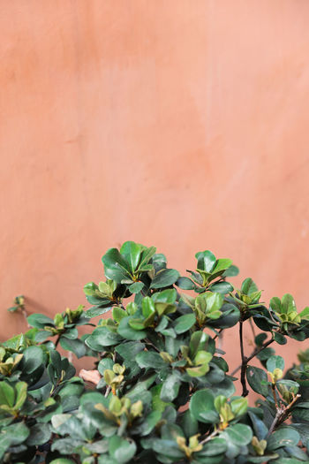 Background Background Texture Coral Colored Green Color Leaf Nature Orange Color Pink Color Plant Plants And Flowers Wall