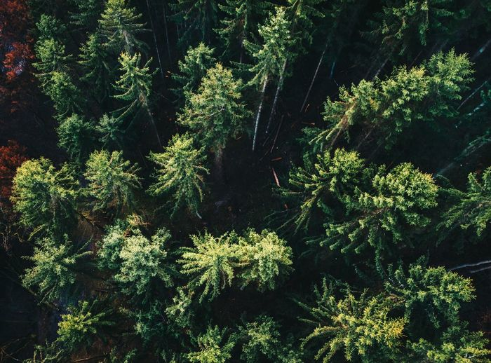 Above the Trees Nature Tree Low Angle View Day Freshness Close-up Green Color Nature Above The Trees Travel Morning Scenic Full Frame Forest WoodLand Wood Flying High