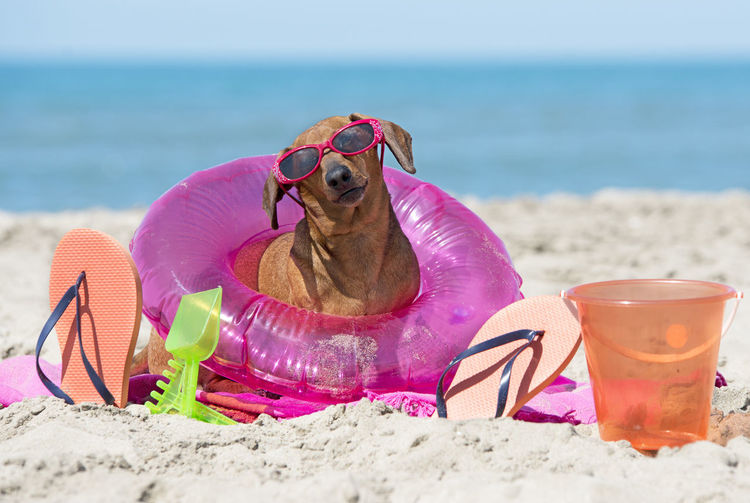 Dog in sunglasses with objects sitting at beach against sky