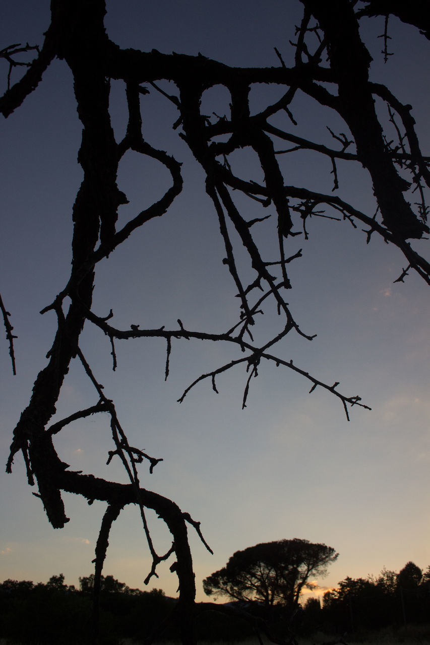 tree, silhouette, nature, sky, outdoors, beauty in nature, tranquility, scenics, no people, branch, sunset, growth, day, water