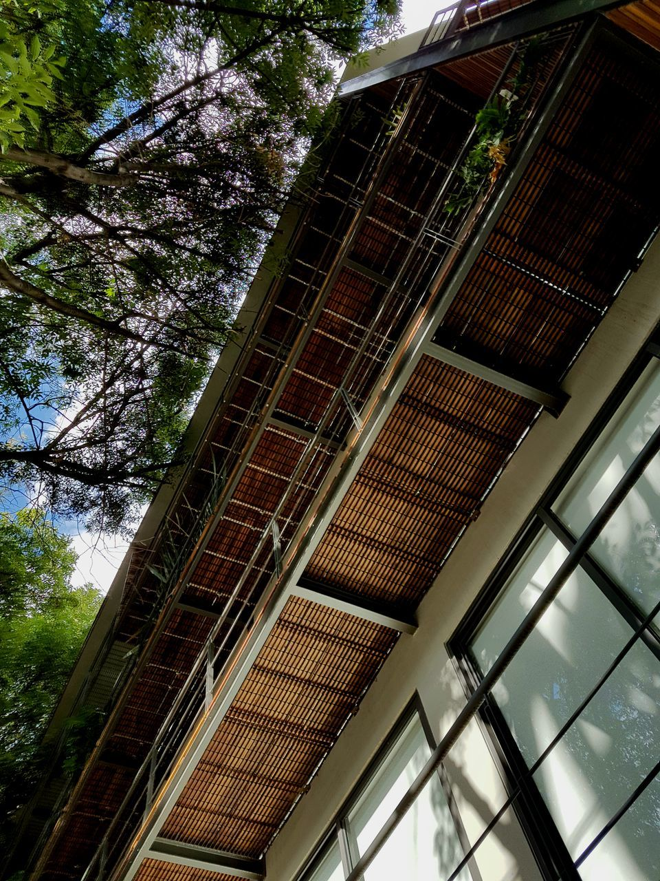 low angle view, architecture, tree, built structure, modern, window, reflection, building exterior, no people, growth, day, outdoors, sky