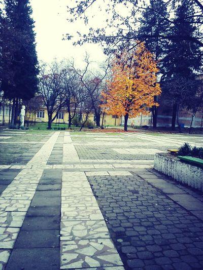 Made In Bulgaria School ✌ Schoollife Study Hard