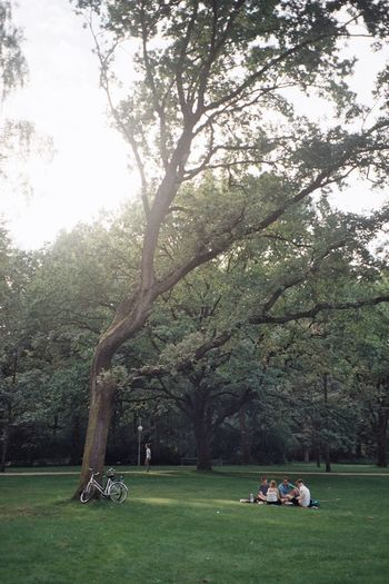 Berlin Day Discover Berlin Grass Nature Outdoors Park People Real People Sitting Tranquil Scene Tranquility Tree