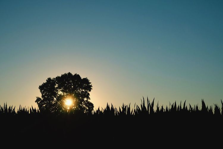 Sonnenuntergang Sky Plant Tree Silhouette Copy Space Growth Tranquility Sunset Beauty In Nature Nature Clear Sky No People Outdoors Land Landscape Field
