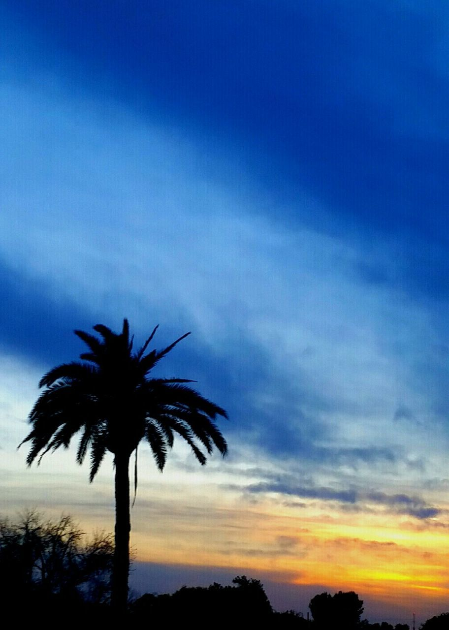 palm tree, silhouette, tree, sky, beauty in nature, sunset, scenics, tranquility, nature, tranquil scene, low angle view, no people, outdoors, tree trunk, blue, growth, cloud - sky, day