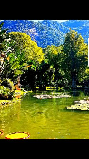 Lake Water No People Nature Tree Beauty In Nature Day Sky Nature Tree Vitoria Regia Beauty In Nature Lake