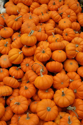 Autumn Farmers Market Orange Pumpkins Abundance Backgrounds Close-up Fall Food And Drink For Sale Freshness Full Frame Halloween Healthy Eating Large Group Of Objects Market No People Orange Color Outdoors Pick And Choose Pumpkin Stack Stems Variety Vegetable