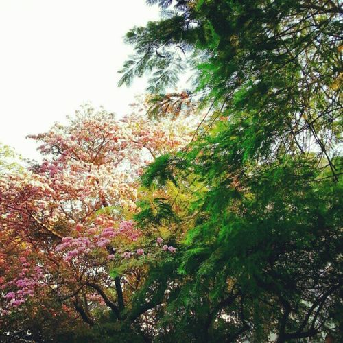 Pink & Foliage In South Numbai