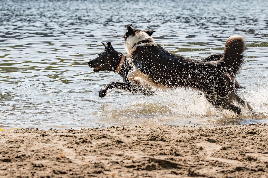 Animal Animal Themes Beach Beach For Dogs Beachlife Canine Day Dog Domestic Domestic Animals Land Mammal Motion Nature One Animal Outdoors Pets Running Sea Splashing Vertebrate Water