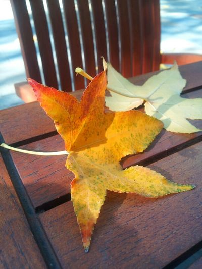 Fallen leaves... Leaves
