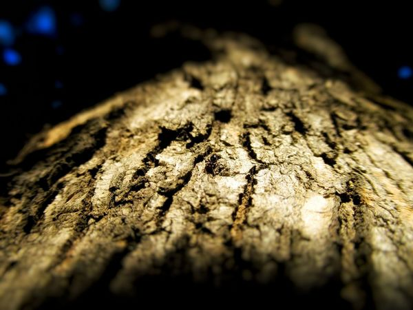 Ant on tree Nature Photography Untouchednature Nature In Wild Low Angle Photo Bug's View Natural Pattern Natural Light Ant Photography Barks Of A Tree Bark Texture Sunlight And Shadow Textured  Rough Close-up No People Wood - Material Outdoors Tree Stump Tree Ring Nature Animal Themes