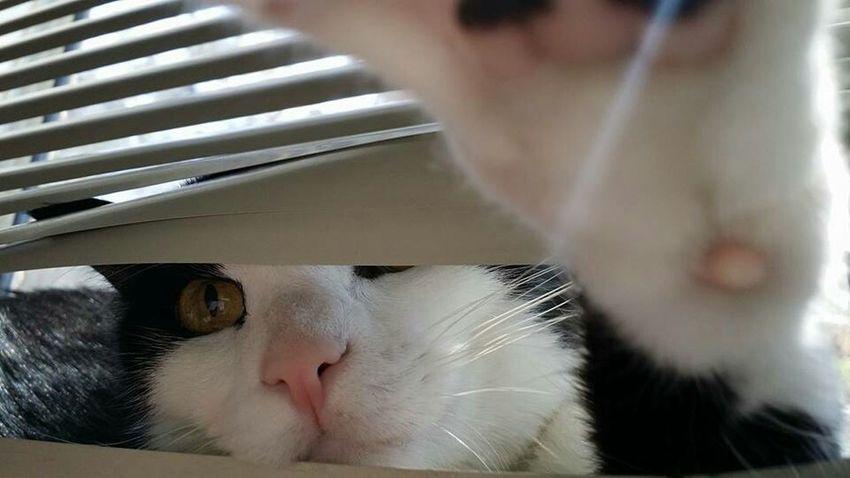Creeper Watching Master Bentley Peeping Tom Cat