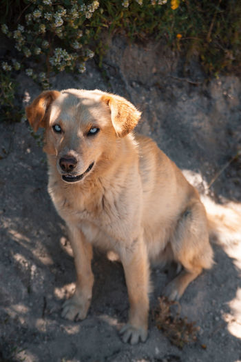Portrait of demonic dog sitting on land