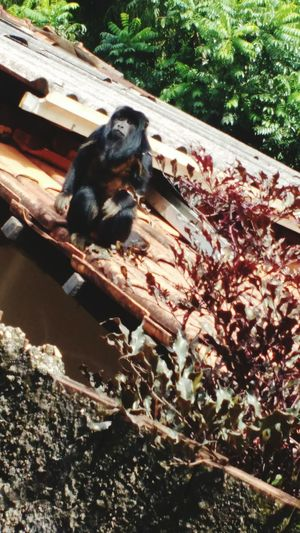There is a monkey on my roof Thatsokay Monkeylife
