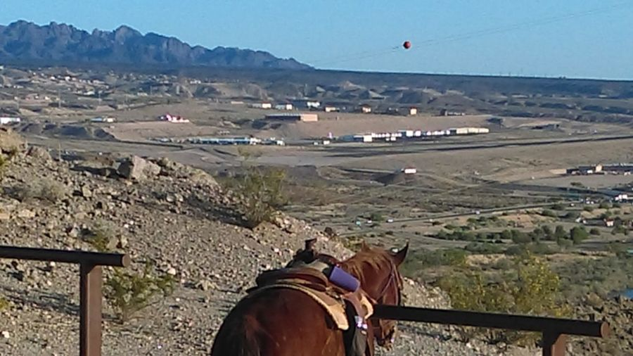 Laughlin Nevada Horseback Riding Horse Paused  Beautifil Exploring Gorgeous What A View