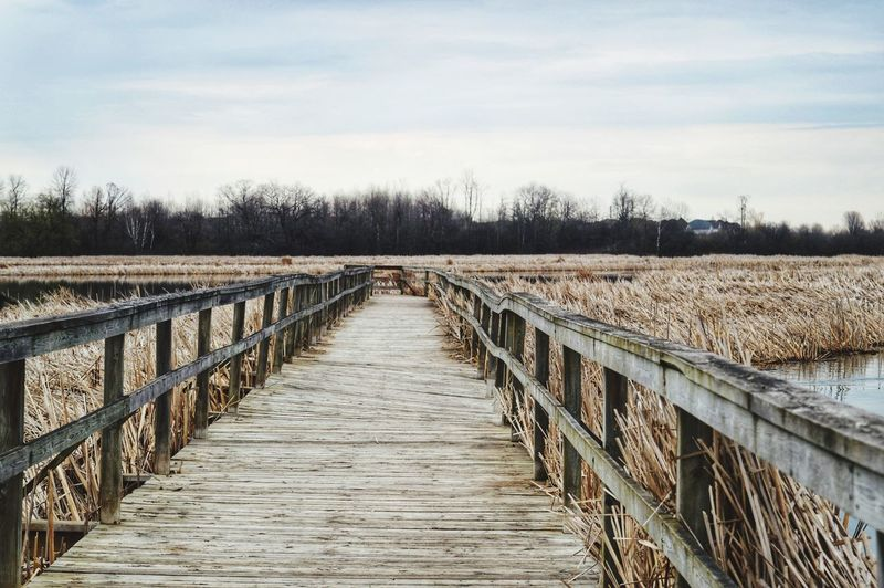 At the end of the road. Tree Sky vanishing point Diminishing Perspective Passageway The Way Forward Walkway Footbridge Empty Road Pathway Fence