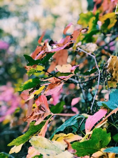 Nature Growth No People Leaf Day Beauty In Nature Outdoors Focus On Foreground Plant Pink Color Fragility Close-up Branch Flower Tree Freshness