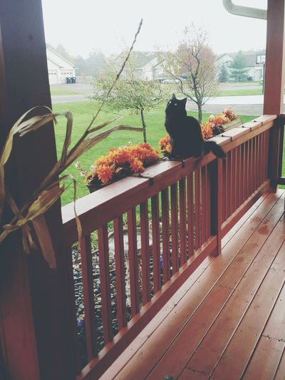 Fall No People Animal Themes Enjoying Life Taking Photos Check This Out Hanging Out Outdoors Tranquility One Animal Pets Cats Of EyeEm Indoors  Cage No People Day Horizontal Animal Themes Freshness Black Cat Photography Black Cat Spirit Autumn Cats Outside At Home