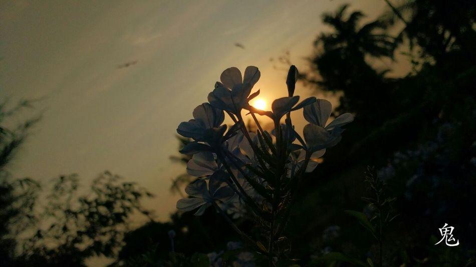 Time Pass  Eye4photography  Motography EyeEm Nature Lover Skylovers Flowers,Plants & Garden Morning Light Morning Sunrise Park Life Visakhapatnam Moto G3 Photography Q