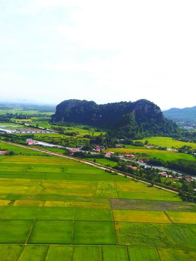Tree Rural Scene Mountain Cereal Plant Agriculture Terraced Field Field Rice Paddy High Angle View House Rice - Cereal Plant