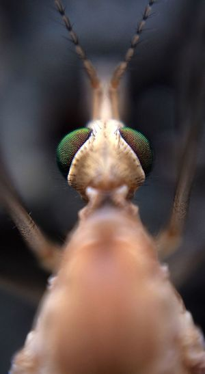 IPS2016Closeup Macro Photography Insect Photography Natureporn Backyardphotography IPS2016Closeup Macro Photograpghy PNWonderland Eyes Insect Macro
