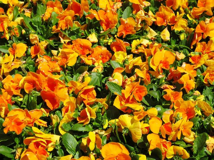 flowers Nature Flower Growth Beauty In Nature Freshness Orange Color Outdoors Day Plant No People Field Petal Full Frame Sunlight Fragility Backgrounds Yellow Flower Head Blooming Close-up