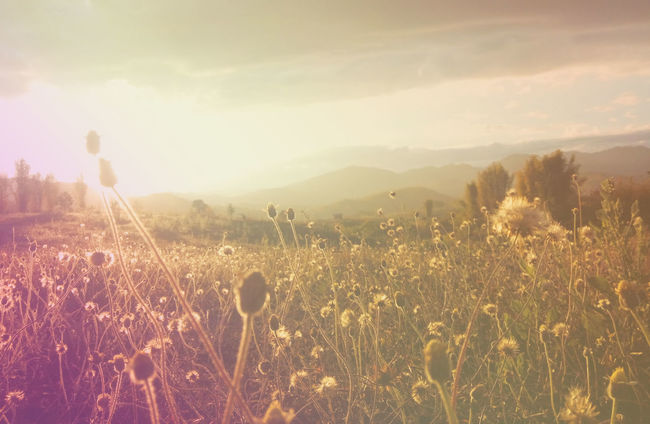 summer vintage grass flowers at sunset Beauty In Nature Cloud - Sky Environment Field Growth Land Landscape Mountain Nature Non-urban Scene Outdoors Plant Scenics - Nature Sky Sunlight Tranquil Scene Tranquility