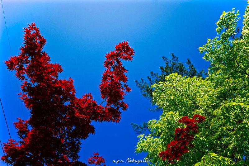 contrast 福井 Fukui Japan Fujifilm Nature 大野 Green Trees Autumn Leaves Fujifilm X-E2