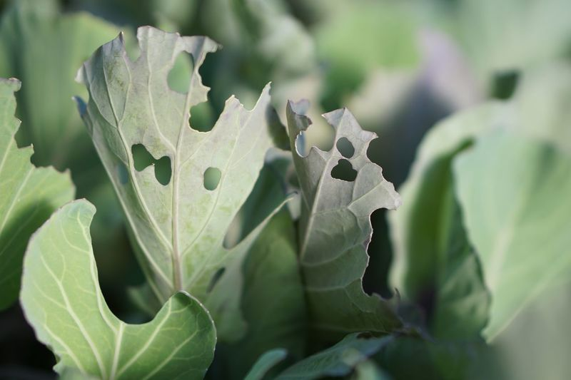 Green Green Green!  Vegetable Leaves Cabbage Nature Photography Leaf Plant Part Plant Growth Green Color Close-up