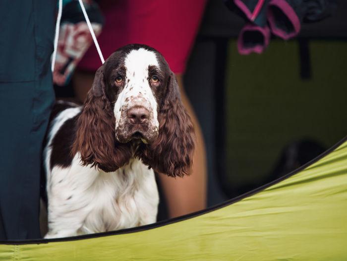Close-up portrait of dog against blurred background