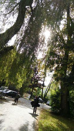 Driveby Shot Driveby Driveby Shooting Outdoor Tree Daylight Am Wegesrand Full Length Green Color Sunny Nature Fishermen Am Parkplatz Parkingplace Herbstzeit Sunlight Lens Flare Herbstspaziergang Tranquil Scene Flanieren