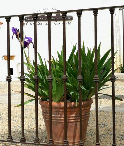 Nature Decoration On The Street No People Plants On The Wall Street Beauty In Nature Tourism Plant Wooden Post Flower Water Sky Plant Life