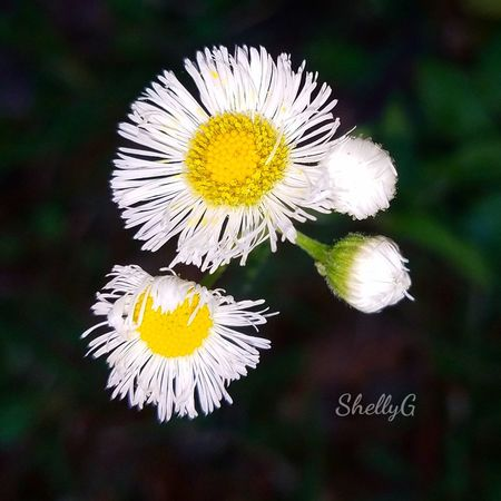Southern weeds