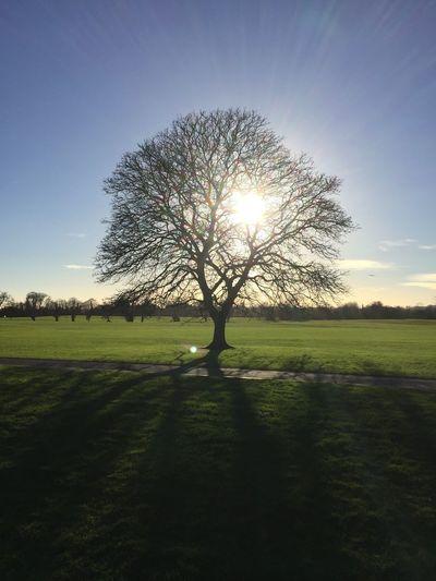 EyeEmNewHere Malahide Castle Ireland Sky Plant Sunlight Tree Grass Nature Field