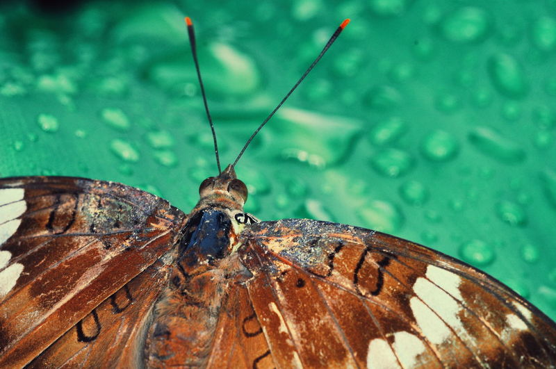Close-up of butterfly on wood