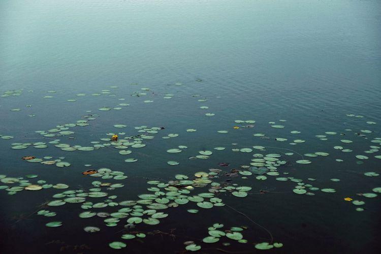 Tianjin University Grainy Pond Lake Water_collection Water Close-up Monsoon Leaves Change Rain Wet Torrential Rain Season  Fall Foggy Full Frame Rainfall Dew Autumn