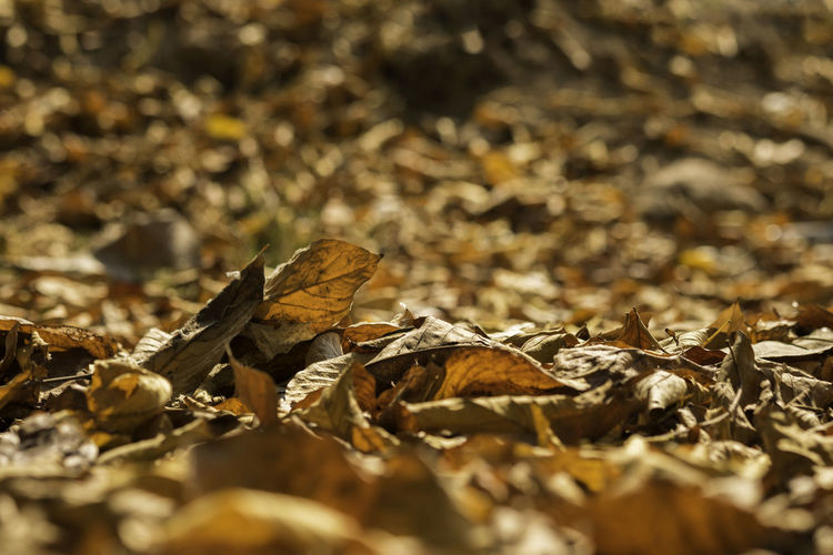 Close-up of dried leaves on field