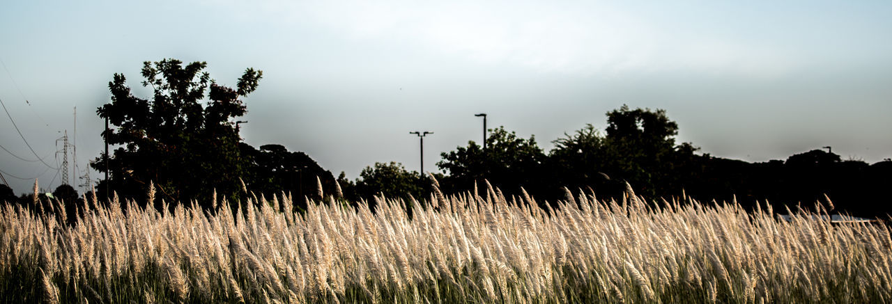Plant Sky Land Tree Field Grass Nature No People Tranquility Growth Environment Landscape Day Scenics - Nature Outdoors Beauty In Nature Tranquil Scene Cloud - Sky Silhouette