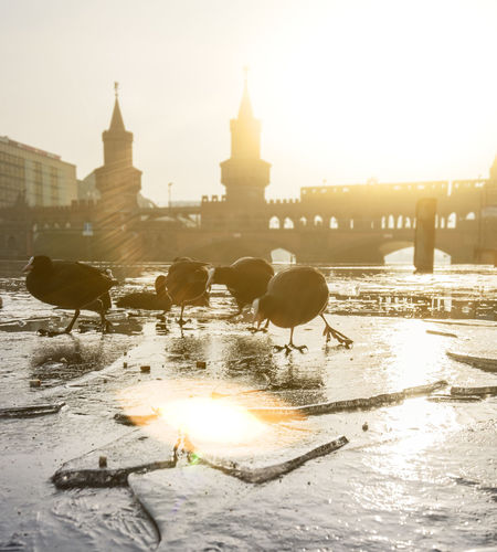 Kalte Füße Ice Oberbaumbrücke U-Bahn Winter Animal Animal Themes Animal Wildlife Animals In The Wild Architecture Bird Building Building Exterior Built Structure Bvg City Cold Group Of Animals Nature Outdoors Sky Travel Destinations Vertebrate Water Winter