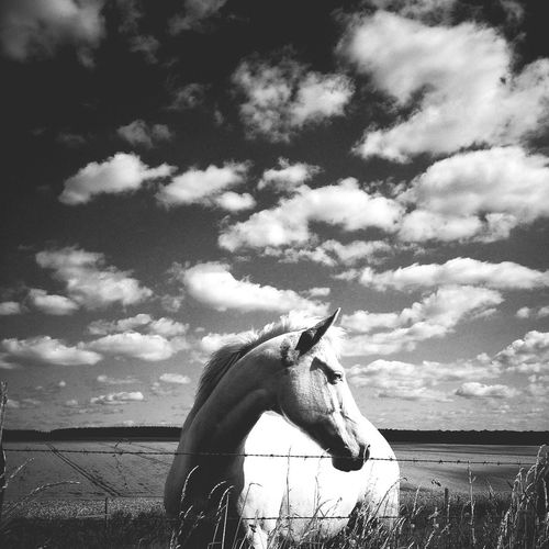 Whitehorse Blackandwhite WeAreJuxt.com AMPt_community Mob Fiction