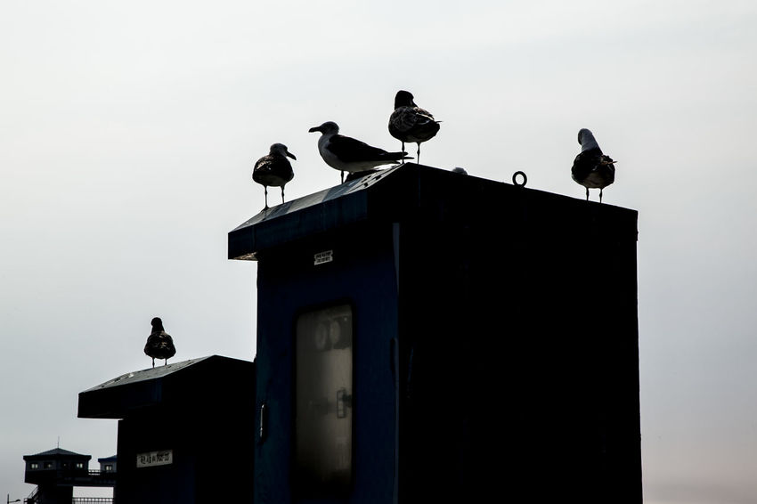 Animal Animal Themes Animals In The Wild Arabatgil Beak Bird Day Escapism Focus On Foreground Full Length Hobbies Light No People Occupation One Animal Perched Perching Protection RISK Sea Gulls Side View Togetherness Wall Wildlife